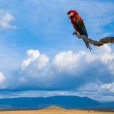 Ζωηρόχρωμος εξωτικός παπαγάλος macaw στους τροπικούς κύκλους της Βενεζουέλας στοκ φωτογραφίες με δικαίωμα ελεύθερης χρήσης