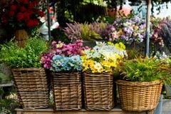 Ζωηρόχρωμος κάδος λουλουδιών Στοκ φωτογραφία με δικαίωμα ελεύθερης χρήσης