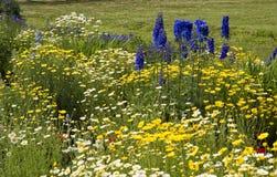 Ζωηρόχρωμος κήπος θερινών λουλουδιών Στοκ Εικόνες