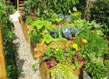 ζωηρόχρωμος κήπος λεπτομερειών Στοκ εικόνα με δικαίωμα ελεύθερης χρήσης