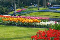 ζωηρόχρωμος κήπος λουλουδιών στοκ φωτογραφίες
