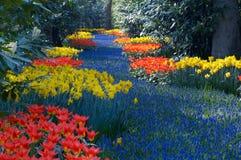 ζωηρόχρωμος κήπος λουλουδιών στοκ εικόνα με δικαίωμα ελεύθερης χρήσης