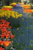 ζωηρόχρωμος κήπος λουλουδιών στοκ φωτογραφίες με δικαίωμα ελεύθερης χρήσης