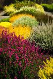 ζωηρόχρωμος κήπος λουλ&om Στοκ φωτογραφία με δικαίωμα ελεύθερης χρήσης