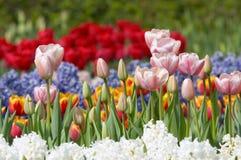 ζωηρόχρωμος κήπος λουλ&om στοκ εικόνα με δικαίωμα ελεύθερης χρήσης