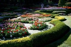 Ζωηρόχρωμος κήπος λουλουδιών στη Mae Fah Luang, Chiang Rai, Ταϊλάνδη Στοκ φωτογραφία με δικαίωμα ελεύθερης χρήσης