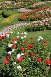 Ζωηρόχρωμος κήπος λουλουδιών στη Mae Fah Luang, Chiang Rai, Ταϊλάνδη Στοκ Εικόνες