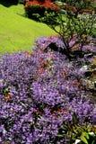 Ζωηρόχρωμος κήπος λουλουδιών στη Mae Fah Luang, Chiang Rai, Ταϊλάνδη Στοκ Εικόνα