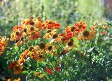 Ζωηρόχρωμος κήπος λουλουδιών Στοκ Εικόνες