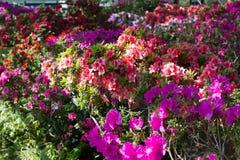 Ζωηρόχρωμος κήπος λουλουδιών Στοκ Φωτογραφία