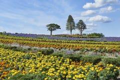Ζωηρόχρωμος κήπος σε Biei Hokkaido Στοκ Εικόνα