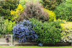 Ζωηρόχρωμος κήπος των Μπους Στοκ εικόνες με δικαίωμα ελεύθερης χρήσης
