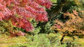 Ζωηρόχρωμος κήπος φθινοπώρου Στοκ εικόνα με δικαίωμα ελεύθερης χρήσης