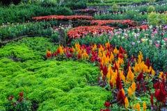 Ζωηρόχρωμος κήπος Στοκ Φωτογραφία