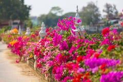 ζωηρόχρωμος κήπος στοκ εικόνα