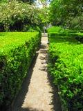 Ζωηρόχρωμος κήπος rdoba CÃ ³ Ισπανία Στοκ Φωτογραφίες