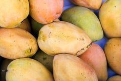 Ζωηρόχρωμος κίτρινος-είναι των τροπικών μάγκο στη Νότια Αμερική - Arequipa, Περού Στοκ Εικόνα