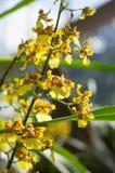 Ζωηρόχρωμος κλάδος λουλουδιών στον κήπο στοκ φωτογραφία