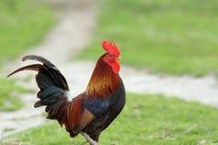 Φωτογραφίες μεγάλο μαύρο πουλί