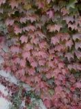 ζωηρόχρωμος ξηρός ανασκόπησης φθινοπώρου βγάζει φύλλα τα φύλλα στοκ φωτογραφία με δικαίωμα ελεύθερης χρήσης