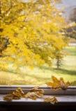 ζωηρόχρωμος ξηρός ανασκόπησης φθινοπώρου βγάζει φύλλα τα φύλλα Στοκ εικόνα με δικαίωμα ελεύθερης χρήσης