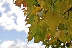 ζωηρόχρωμος ξηρός ανασκόπησης φθινοπώρου βγάζει φύλλα τα φύλλα Στοκ Εικόνες