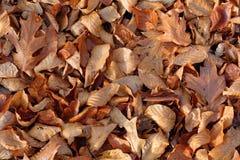 ζωηρόχρωμος ξηρός ανασκόπησης φθινοπώρου βγάζει φύλλα τα φύλλα Στοκ Φωτογραφία