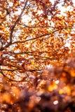 ζωηρόχρωμος ξηρός ανασκόπησης φθινοπώρου βγάζει φύλλα τα φύλλα Στοκ εικόνες με δικαίωμα ελεύθερης χρήσης