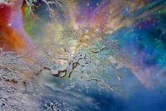 Ζωηρόχρωμος ουρανός τη νύχτα με το σφένδαμνο Στοκ Εικόνες