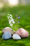 Ζωηρόχρωμος λουλούδι-02 Στοκ φωτογραφία με δικαίωμα ελεύθερης χρήσης