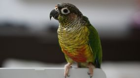 Ζωηρόχρωμος παπαγάλος σε ένα θολωμένο υπόβαθρο στοκ εικόνες