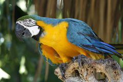 ζωηρόχρωμος παπαγάλος Στοκ εικόνες με δικαίωμα ελεύθερης χρήσης