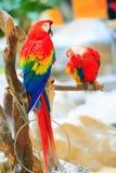 Ζωηρόχρωμος παπαγάλος Στοκ Φωτογραφία
