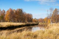 Ζωηρόχρωμος ποταμός φθινοπώρου με στα άγρια ξύλα Στοκ Εικόνες