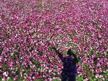 Ζωηρόχρωμος ρόδινος τομέας λουλουδιών Στοκ Φωτογραφία