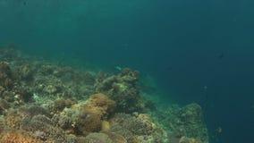 Ζωηρόχρωμος σκόπελος με τα υγιή σκληρά και μαλακά κοράλλια 4K απόθεμα βίντεο