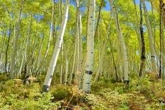 Ζωηρόχρωμος στο δάσος κατά τη διάρκεια της εποχής φυλλώματος Στοκ εικόνες με δικαίωμα ελεύθερης χρήσης