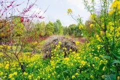Ζωηρόχρωμος τομέας λουλουδιών βιασμών Στοκ Φωτογραφία