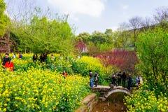Ζωηρόχρωμος τομέας λουλουδιών βιασμών Στοκ Εικόνα