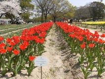Ζωηρόχρωμος τομέας λουλουδιών στο Βορρά κατά τη διάρκεια του φθινοπώρου, Hokkaido, Ιαπωνία στοκ φωτογραφίες με δικαίωμα ελεύθερης χρήσης