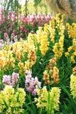 Ζωηρόχρωμος του λουλουδιού ορχιδεών στον κήπο με τον εκλεκτής ποιότητας τόνο στοκ φωτογραφίες
