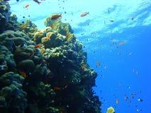 Ζωηρόχρωμος υποβρύχιος κόσμος της Ερυθράς Θάλασσας στοκ φωτογραφία με δικαίωμα ελεύθερης χρήσης