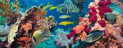 Ζωηρόχρωμος υποβρύχιος σκόπελος με το κοράλλι και τα σφουγγάρια Στοκ φωτογραφία με δικαίωμα ελεύθερης χρήσης