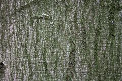 Ζωηρόχρωμος φλοιός δέντρων στη φύση κατασκευασμένος, οργανικός στοκ φωτογραφία με δικαίωμα ελεύθερης χρήσης