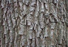 Ζωηρόχρωμος φλοιός δέντρων στη φύση κατασκευασμένος, οργανικός στοκ εικόνα με δικαίωμα ελεύθερης χρήσης