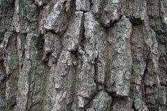 Ζωηρόχρωμος φλοιός δέντρων στη φύση κατασκευασμένος, οργανικός στοκ εικόνες
