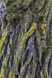 Ζωηρόχρωμος φλοιός της παλαιάς κινηματογράφησης σε πρώτο πλάνο αποβαλλόμενων δέντρων Στοκ Εικόνες