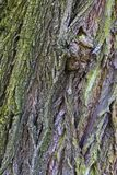 Ζωηρόχρωμος φλοιός της παλαιάς κινηματογράφησης σε πρώτο πλάνο αποβαλλόμενων δέντρων Στοκ Εικόνα