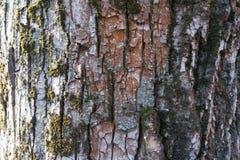 Ζωηρόχρωμος φλοιός του μαύρου δέντρου λευκών Στοκ φωτογραφία με δικαίωμα ελεύθερης χρήσης