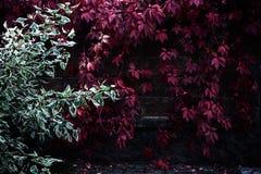Ζωηρόχρωμος φράκτης κήπων με τις εγκαταστάσεις χρωμάτων φθινοπώρου Στοκ Εικόνες